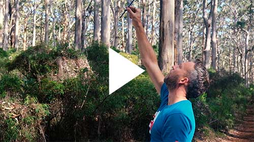 Video about Joe Webster painting in the great outdoors, Australia